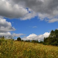 цветочный холм :: Алексей Могилёв