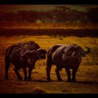 Трио на закате...Танзания! :: Александр Вивчарик