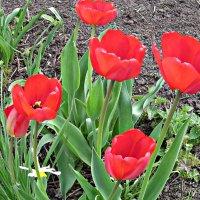 весна в саду :: Надежда