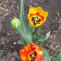 Жёлто-красные цветы :: Дмитрий Никитин