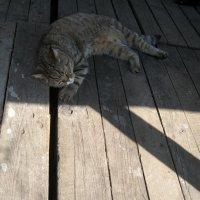 Яша в ожидании мыша... :: muh5257