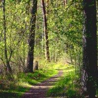 В весеннем лесу :: Александр Садовский