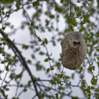 Гнездо :: Алексей Вольтов
