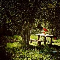 Подглядела в чужом саду :: Лариса Коломиец