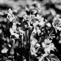 bw spring :: Анастасия Фролова