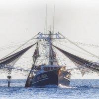 На рыбалку :: svabboy photo