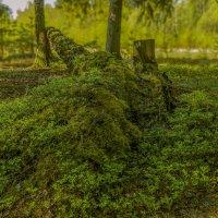 В весеннем заколдованном лесу... :: Михаил (Skipper A.M.)