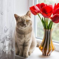 натюрморт: цветы и кот) :: Наталья М