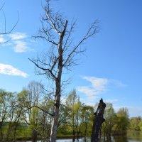 Разлив реки Демы :: Сергей Тагиров