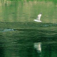Над водой :: Сергей Форос