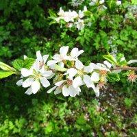 Весны цветение :: Андрей Снегерёв