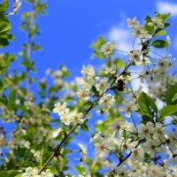 Букет от аромата вишни долгожданной… :: Валентина ツ ღ✿ღ