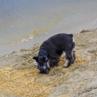 собачка гуляет у озера :: Света Кондрашова