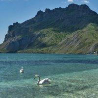 Лебеди в Коктебельской бухте :: Игорь Кузьмин