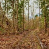 В апрельском лесу... :: марк