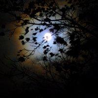 ночной пейзаж :: Александр Прокудин
