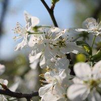 #Весна :: Екатерина Ермилова