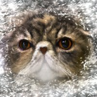 Сквозь узоры зимы-из серии Кошки очарование мое! :: Shmual Hava Retro