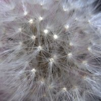 Flower_60 :: Trage