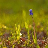майская мелодия...#4 :: Андрей Вестмит