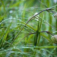 Биссер природы.. :: ФотоЛюбка *
