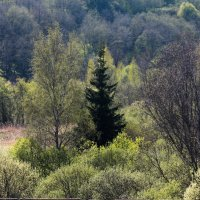 Весна :: Денис Матвеев