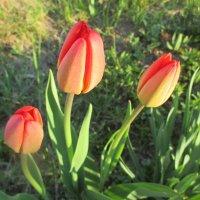 Цветочное трио . :: Valentina
