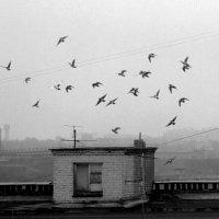 Стая птиц :: Николай Филоненко