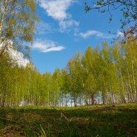 Сочные краски весеннего леса! :: Роман Царев