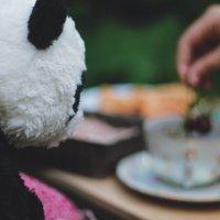 panda :: Анастасия Фролова