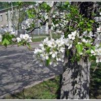 Весна в городе :: muh5257