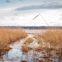 озеро Тунайча, Сахалинская область :: Timofey Chichikov