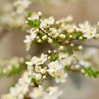 весна :: ирэн