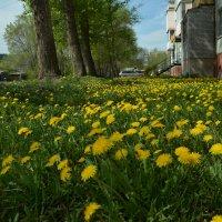Город перед 9 мая. :: юрий Амосов