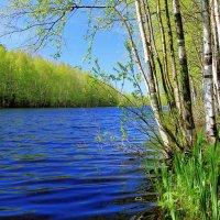 И снова весна.. :: Iverinka .