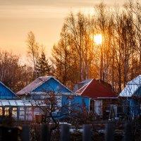 Майским утром на Вторых садах. :: Сергей Щелкунов