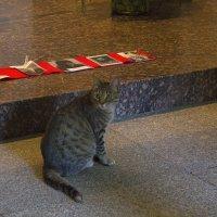 Котик в музее :: Aнна Зарубина