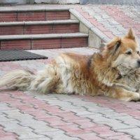 Сторожевой пёс Дон :: Дмитрий Никитин