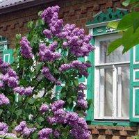 Сирень под окном :: Татьяна Смоляниченко