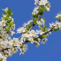Красота весны :: Роман Царев