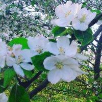 В саду :: Анастасия Tрушко