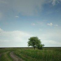 дерево♥ :: Дарья