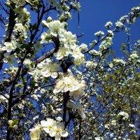 Цветущий сад :: veera (veerra)