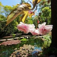 Гуляя в японском саду 4 :: Alexander Andronik