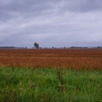 Осеннее поле :: Константин Шабалин