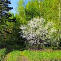 Всё слышнее майская листва... :: Лесо-Вед (Баранов)