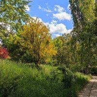 Дорожка в парке :: Юрий Яловенко