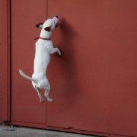 Собака летает :: Oswaldo Kr.