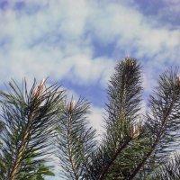 Небо над питомником-4 :: Сергей Гвоздев