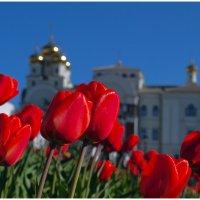первые тюльпаны... :: BEk-AS 62